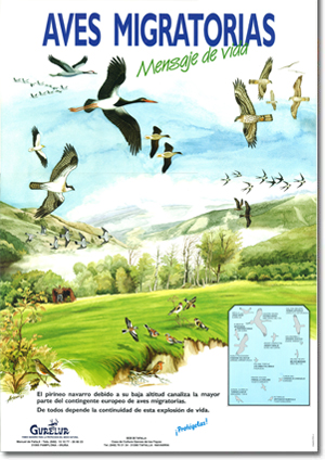 Poster: Migratory birds - Message of life (1 €)
