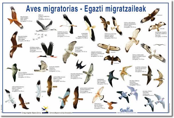 cadenas migratorias yahoo dating