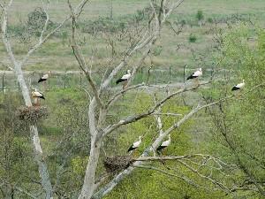 Cigüeñas en Mendavia
