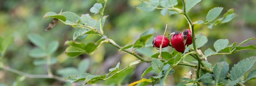 otoño frutos