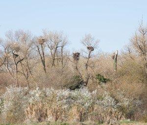 La mitad de los nidos están ubicados en árboles