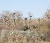 939 parejas de cigüeña blanca inician la reproducción en 2019 en Navarra