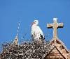 943 parejas de cigüeña blanca inician su reproducción en Navarra