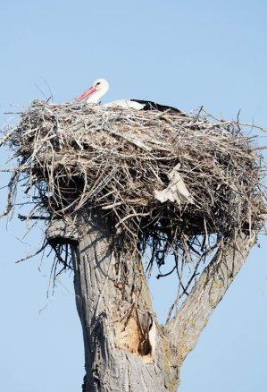 534 nidos en árbol