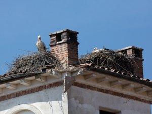 Cada vez se ven menos nidos de cigüeña en edificaciones humanas