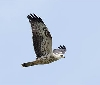 El Centro de Migración de Aves de Gurelur cumple 25 años