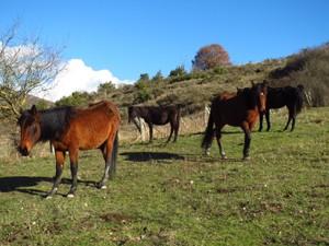 caballos abandonados
