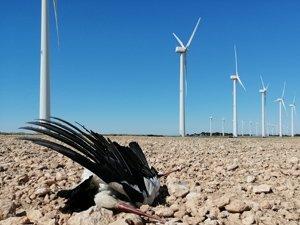 Nos estamos quedando sin fauna por culpa de la eólica