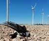 """Gurelur advierte sobre la pandemia ambiental que sufrimos y que se puede agravar con el """"Plan Reactivar Navarra"""""""