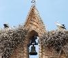 Gurelur celebra la festividad de San Blas con charlas y observatorios sobre las cigüeñas