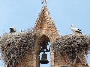 El año 2019 nidificaron 44 parejas en Tudela