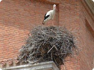 Voluminoso nido de cigüeña blanca en San Adrián