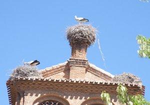 El convento de las Dominicas en Tudela alberga 9 nidos de cigüeña
