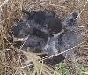 Gurelur denuncia ante la Consejera de Medio Ambiente la matanza de golondrinas que se está realizando en Yesa