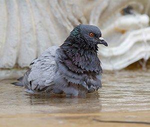 Las palomas siguen con su vida normal en la Plaza del Castillo