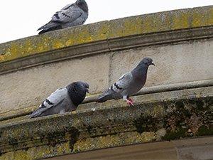 Sigue habiendo igual número de palomas o más.