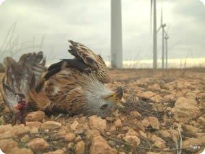 Una de las miles de aves muertas en las centrales