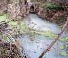 Gurelur denuncia el reiterado vertido de aguas residuales al río Alhama a su paso por Corella y las graves contaminaciones que están produciendo