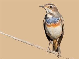 Pobres los pájaros de Navarra