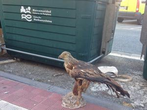 La fauna navarra en la basura