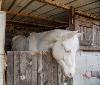 Gurelur denuncia la inhumana situación de unos caballos en Etxauri