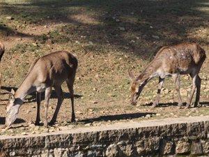 En estas condiciones no se pueden tener ciervos en La Taconera