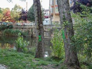 A los parques fluviales les molestan los árboles
