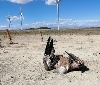 """Gurelur denuncia la terrible mortandad de fauna protegida que se está produciendo en el """"Complejo eólico Cavar"""""""