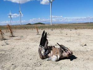 Al menos 10 buitres muertos en dos meses