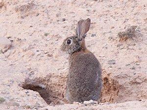 Muerte a los conejos y a la ley