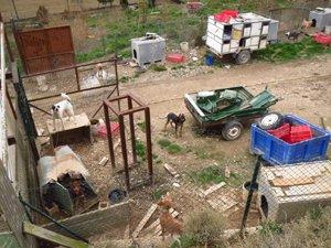Maltrato de decenas de perrros en Artajona