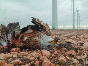 Van más de 60.000 ejemplares de fauna protegida muertos