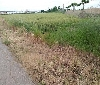 Gurelur ha solicitado al Ayuntamiento de Mendavia que deje de utilizar venenos para eliminar vegetación natural