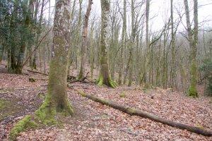Vista de los interiores de los bosques de Bertiz