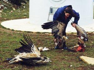 Masacre de fauna protegida