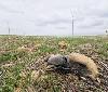 """Gurelur presenta denuncia ante la Consejera de Medio Ambiente por el hallazgo de 16 buitres muertos en la central eólica """"Cabanillas II"""""""