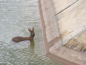 La fauna muere ante la indiferencia de Medio Ambiente