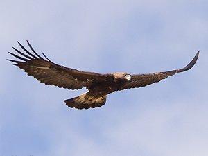 Libertad para todas las aves del mundo