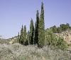 Gurelur rechaza la manipulación que rodea a la destrucción del Barranco de Barcelosa en Tudela