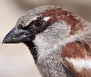 Gurelur solicita a la Consejería de Medio Ambiente la anulación de la Orden Foral sobre especies plaga