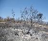 Gurelur solicita la puesta en marcha de medidas ambientales para recuperar lo destruido en el Vedado de Eguaras