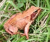 La desaparición de los anfibios preocupante aviso de lo que está ocurriendo con el medio ambiente navarro