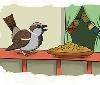 Los gorriones y otros de los pájaros de nuestras ciudades y pueblos están pasando hambre debido al confinamiento que estamos sufriendo