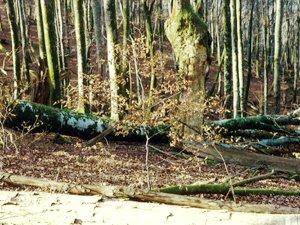 Los forestales del Departamento campan a sus anchas en Bertiz