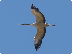 Centro de Migración de Aves